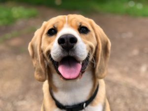 staffed animal dog